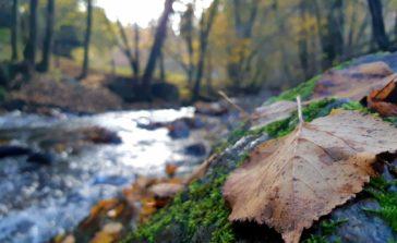 Dans un bois, entre mousses, pierres et feuilles, une rivière coule
