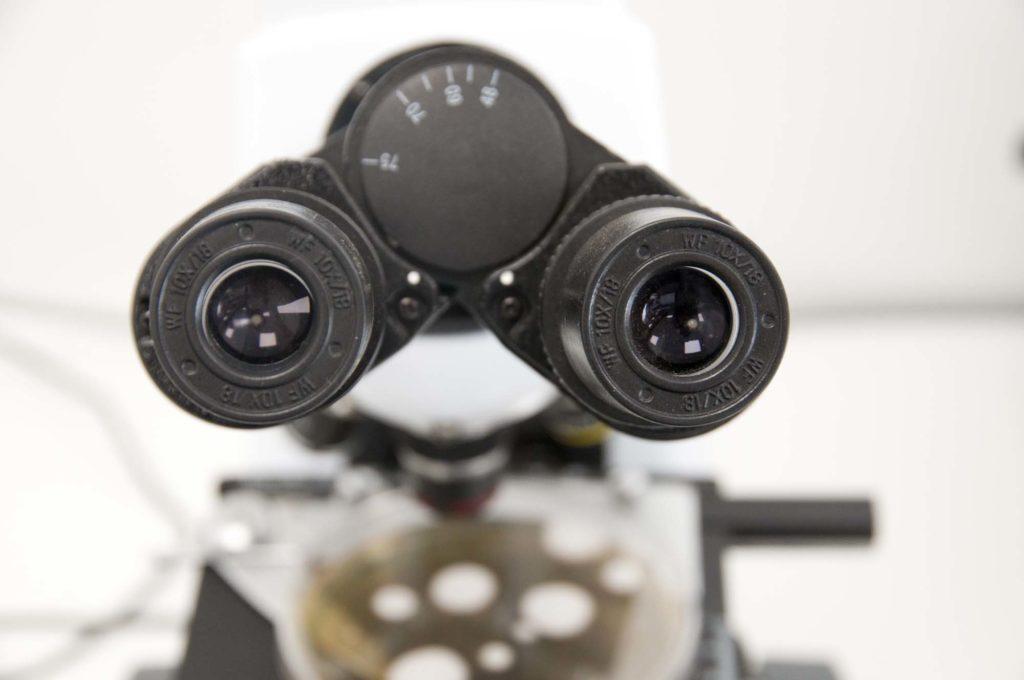 loupe binoculaire, laboratoire mézagri, 3clt